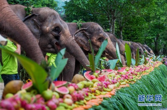 云南西双版纳举行世界大象日活动