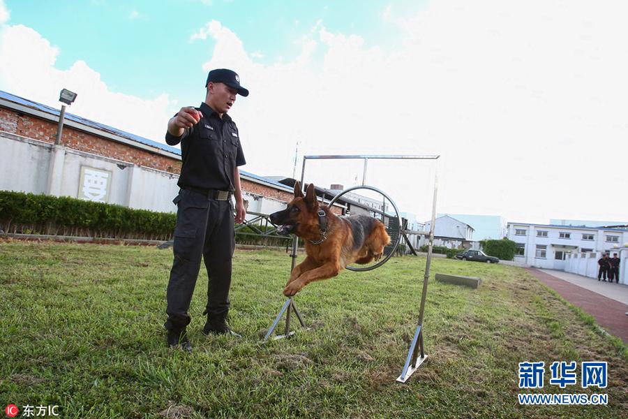 """探班上海警犬训练基地 个个都是英勇""""好汉"""""""
