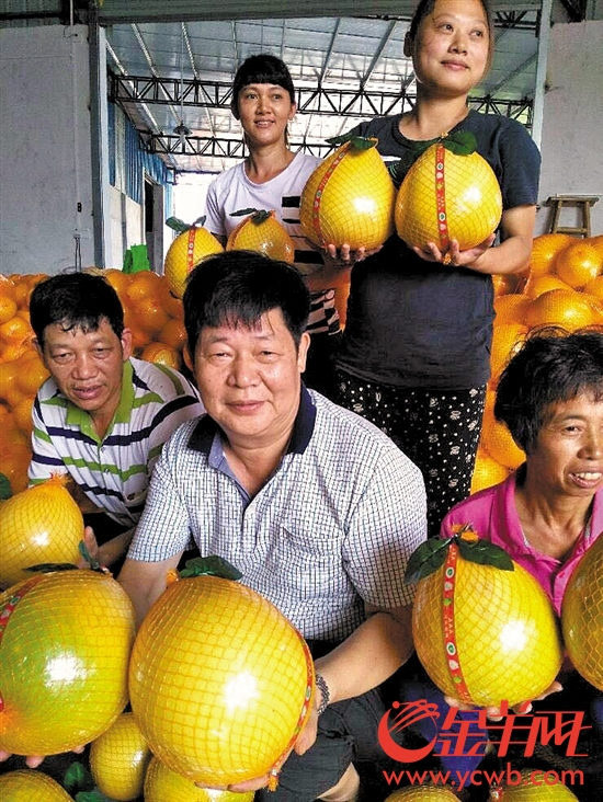 『老柚王』喜笑颜开