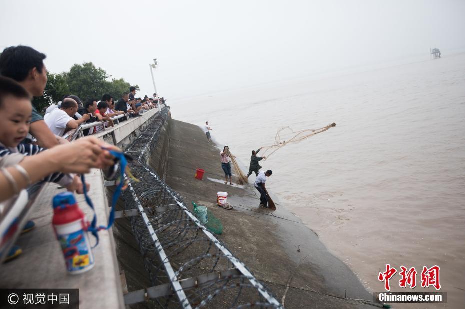 钱塘江迎大潮 别人观潮他们翻越围栏撒网捕鱼