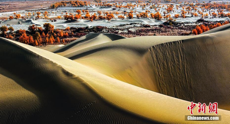 新疆塔里木河生态环境改善 胡杨林生长茂盛