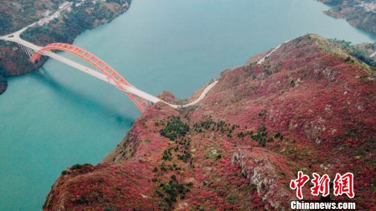 三峡迎来一年最美季节满山红叶层林尽染