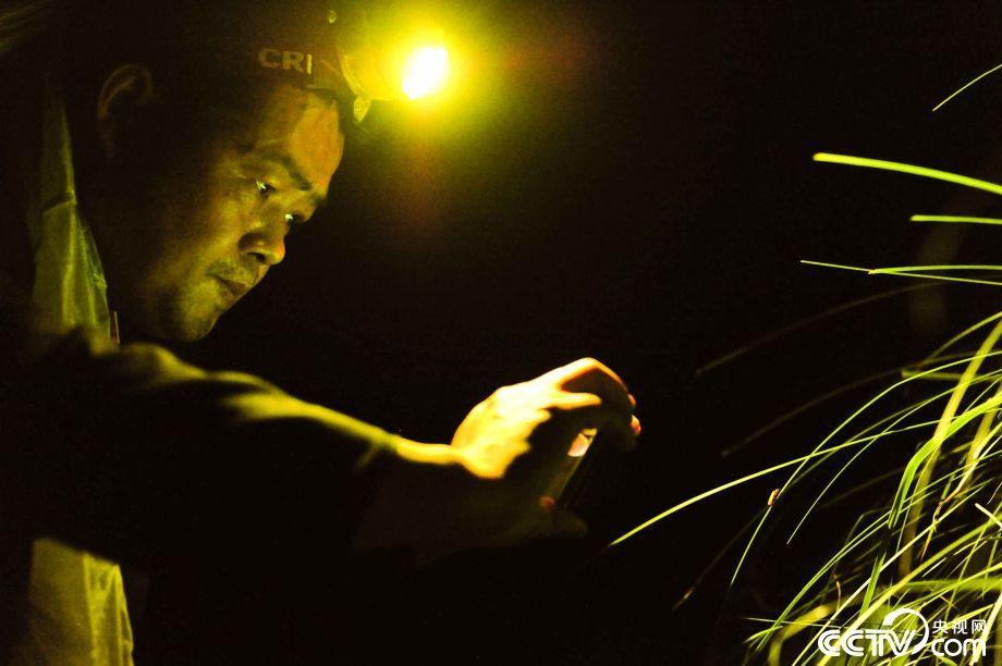 """男子追逐寒冬里的萤火虫 在深山为它们筑""""洞房"""""""