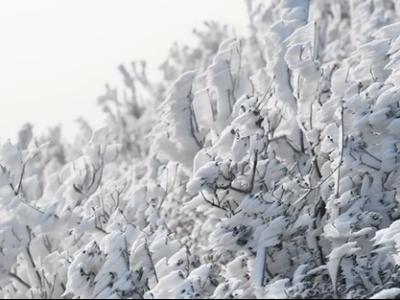 美如画!岭南初见雪