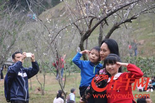 新年赏新花 广州这些赏花点你去了吗