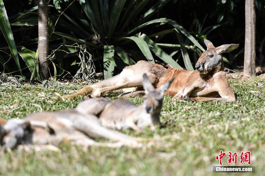 广州迎来暖暖冬日阳光 动物慵懒享受日光浴