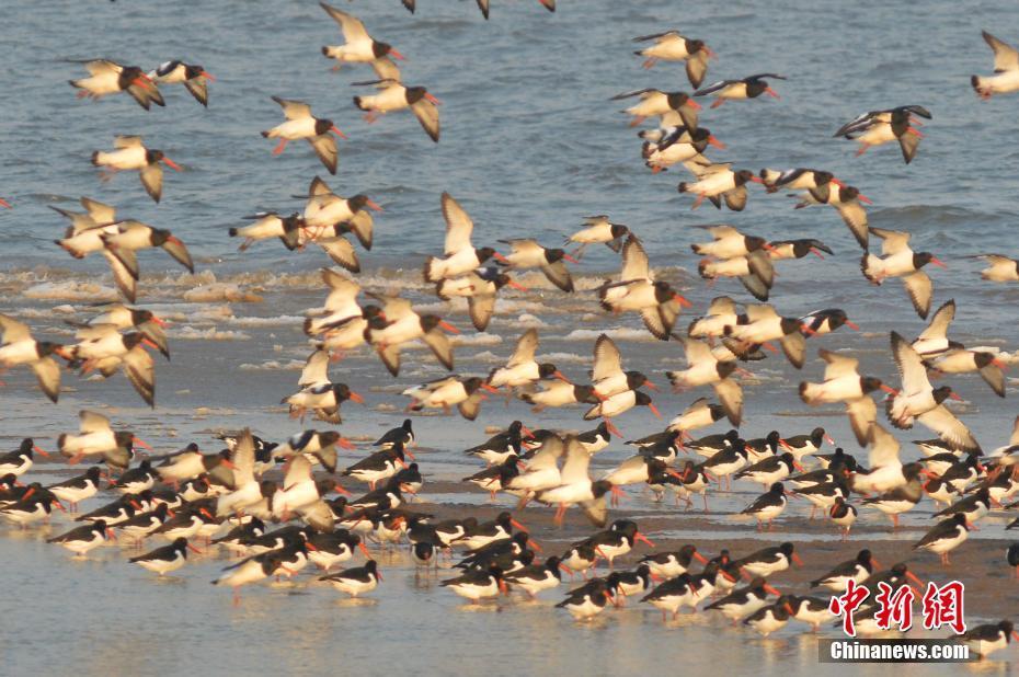 青岛胶州湾湿地海冰初融