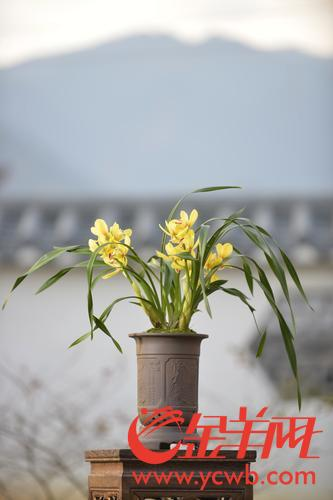 """""""兰界盛事""""3月亮相翁源 将展出万盆兰花,价值超10亿"""