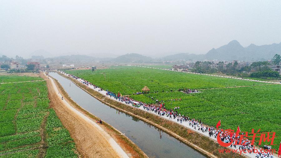 春节去云浮看全省最大连片油菜花