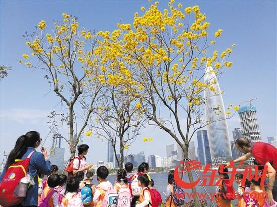 三月深圳 花开正艳