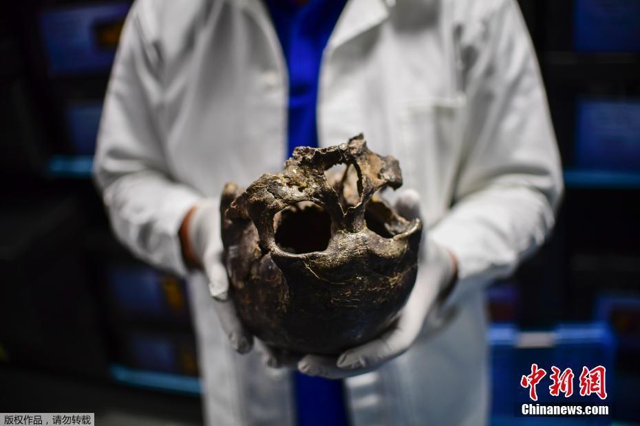 探访墨西哥国家人类学博物馆 馆藏2万余件人类骨骼