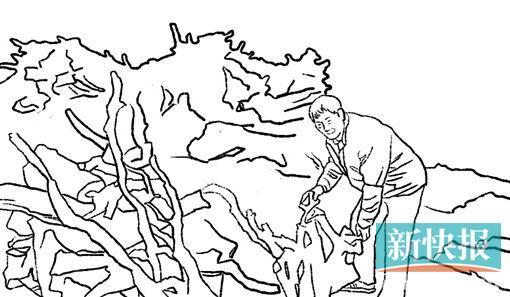 【中国梦·践行者】杜鹃树根化成唐氏根书 20道工序顺
