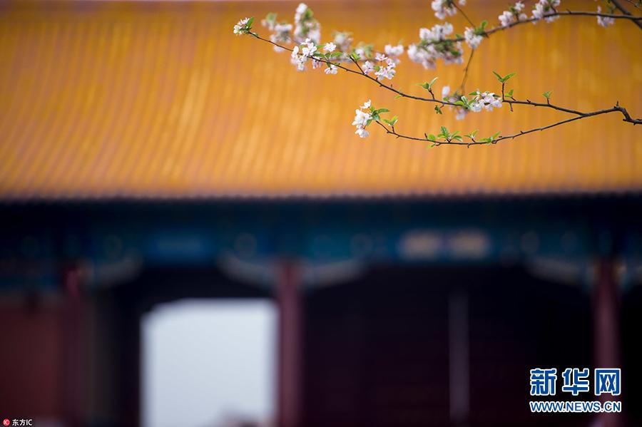 """故宫4月""""花季""""秒变御花园 红墙花影韵味十足"""
