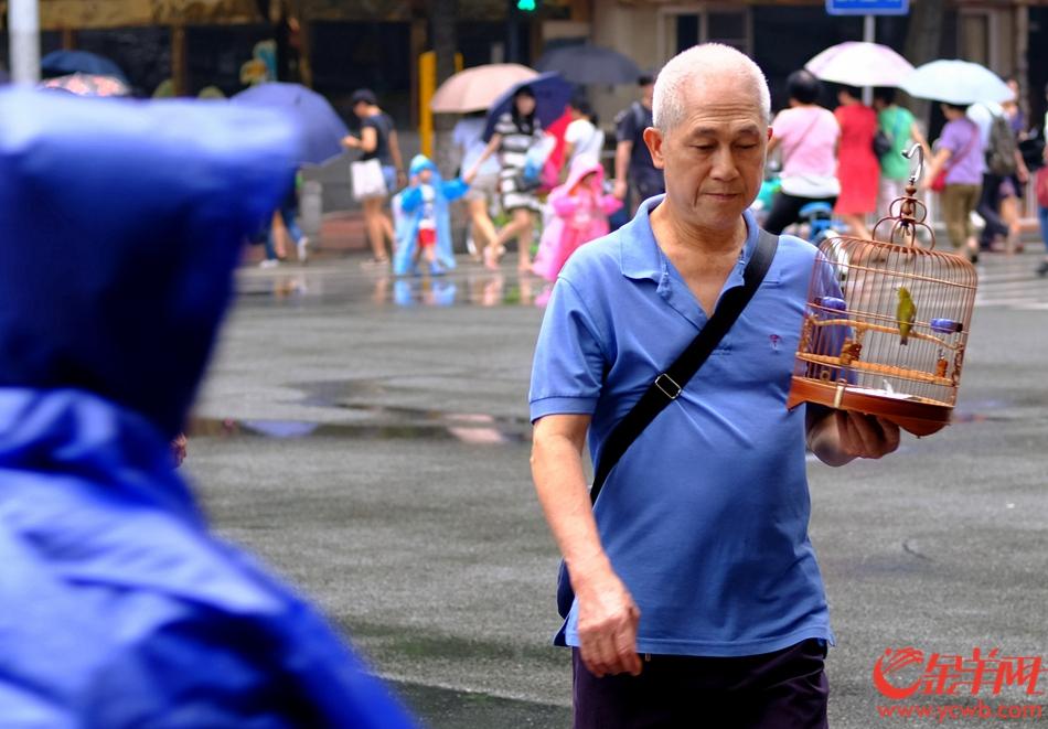 """啊叔冒雨""""遛鸟""""。记者 陈秋明 摄"""