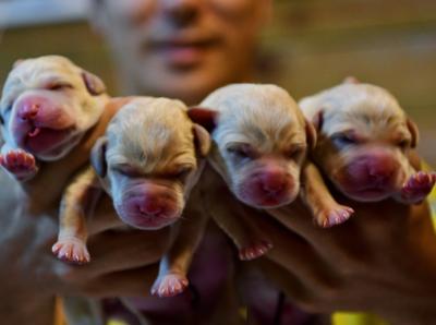 南方导盲犬基地今天又迎来四条小生命