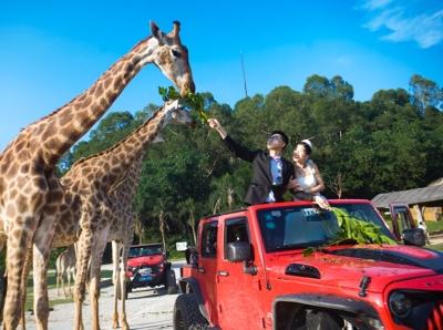 百对新人在长隆野生动物世界参加动物主题空中婚礼