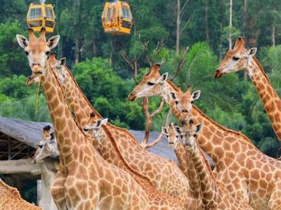 长隆野生动物世界上演万兽盛会