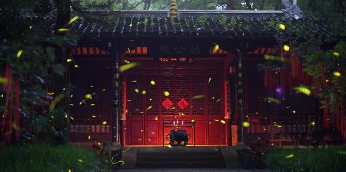 南京紫金山萤火虫漫天飞舞 好似童话世界