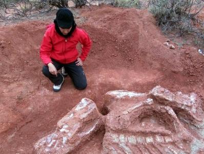 阿根廷出土2亿年前巨型恐龙遗骸