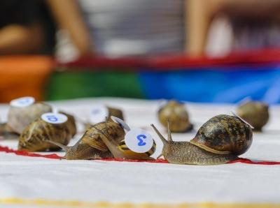 """考验耐心的时候到了!英国""""蜗牛赛跑""""堪称史上最慢"""