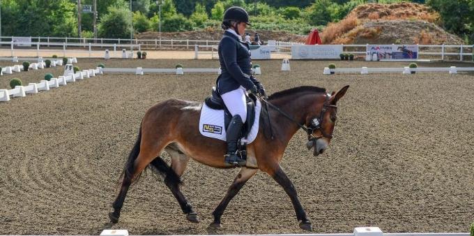 英国首只骡子参加盛装舞步赛击败8匹马夺冠