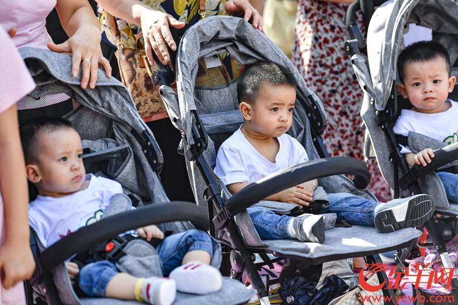 当天,来自全国的100个三胞胎家庭一起来送上生日祝福。金羊网记者 宋金峪 摄