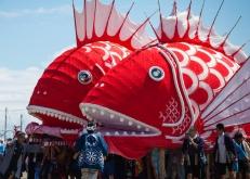 """日本愛知縣舉辦傳統海鯛祭 壯年扛巨型""""鯛魚""""入海求豐收"""