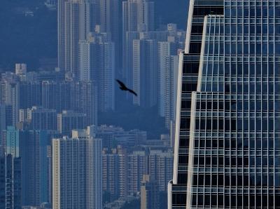 大城市里难得一见场景!香港有麻鹰出没
