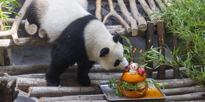 """南京:大熊猫""""和和""""""""九九""""迎来三周岁生日"""