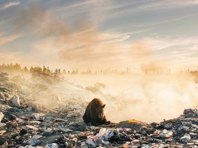 垃圾堆里求共存的动物们