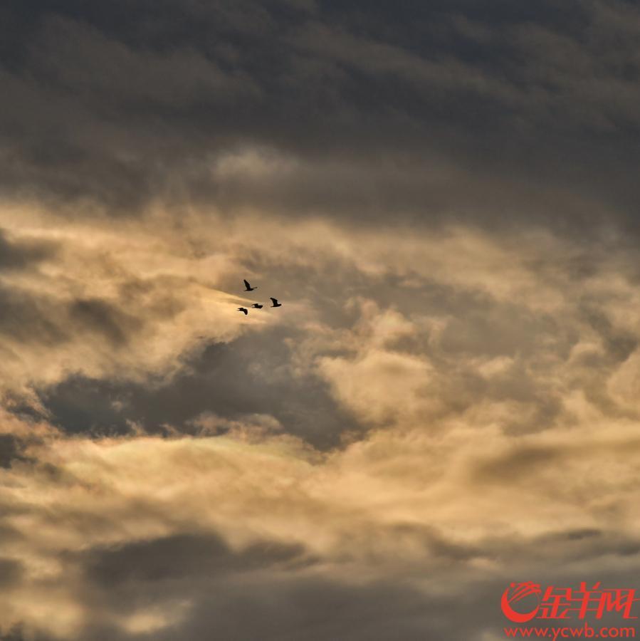 连日来,广州下雨不停,9月2日傍晚,雨终于暂停,久未露面的太阳公公终于现身,洒下金光,羊城天空现靓丽晚霞。记者 陈秋明 摄影报道
