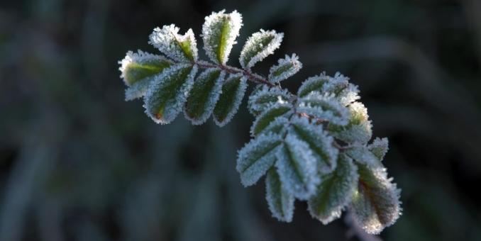 气温跌至-13.3℃ 呼伦贝尔出现霜冻天气