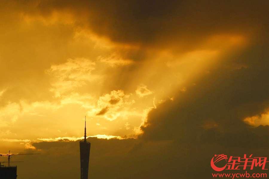 2018年9月12日,台风百里嘉来袭前,黄昏时分的广州天空绽放一片金光。 小蛮腰在矗立江边,沐浴在一片温柔的光芒中。 金羊网记者 周巍 摄