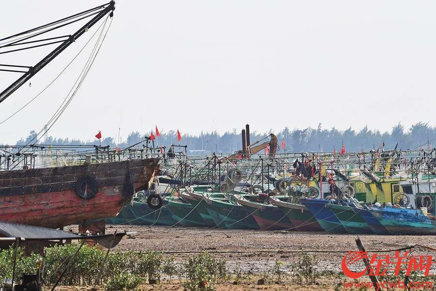 """""""山竹""""将至,昨天,湛江市各避风港停留的渔船在阳光下静静地等待。金羊网记者 邓勃 摄"""