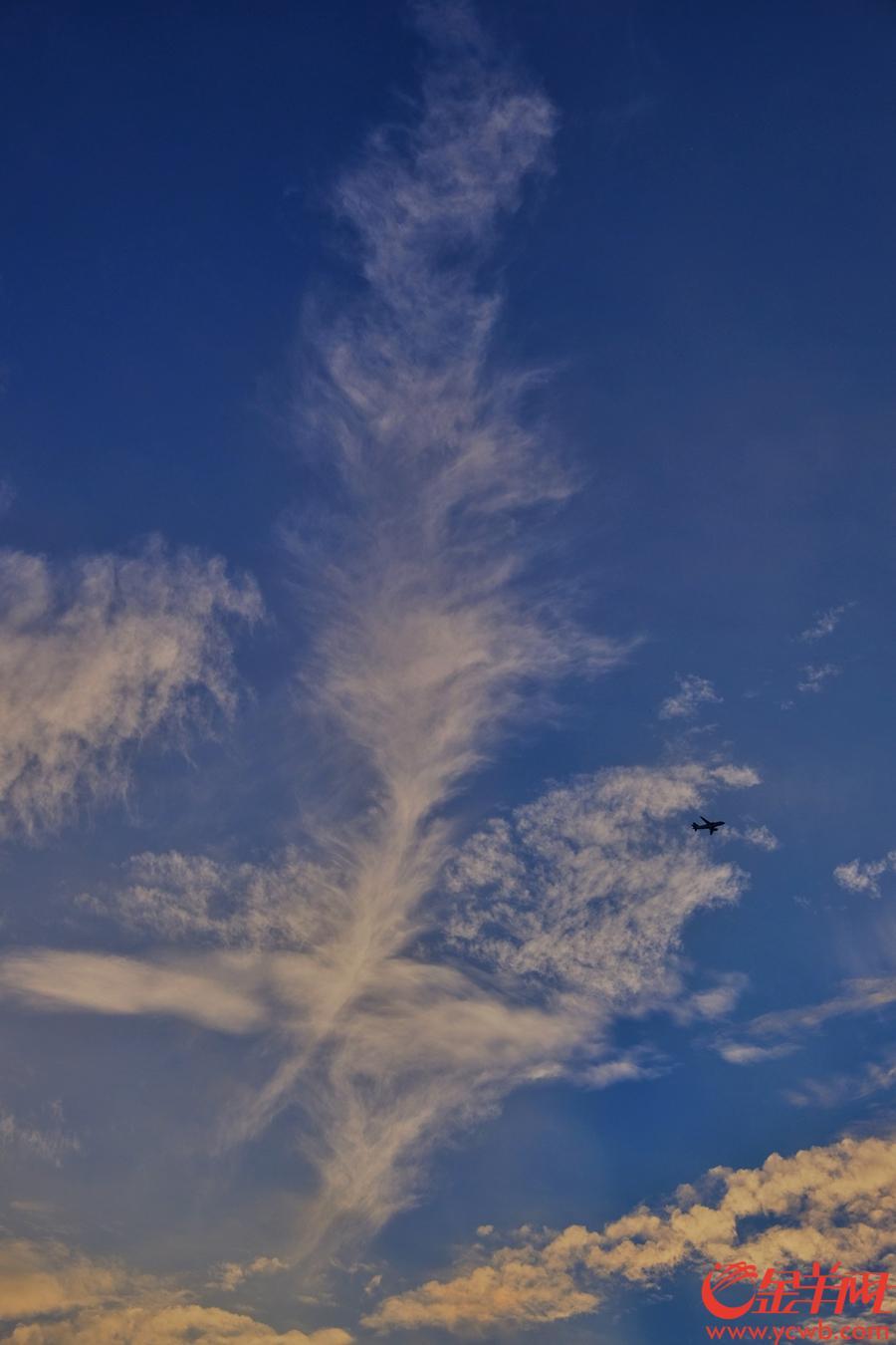 """9月15日傍晚,台风""""山竹""""逼近,羊城天空云起风涌,晚霞靓丽。金羊网记者  陈秋明 摄"""