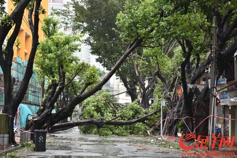 2018年9月16日下午,台风山竹影响广州市区。图为海珠区草芳围路面一片狼藉,树倒电线杆砸中小汽车。 记者 宋金峪 摄