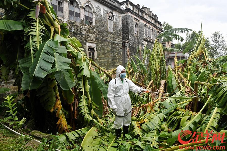 2018年9月18日上午,台山市白沙镇五围村,村内水涝退去后,白沙镇中心卫生院的工作人员正在喷洒消毒剂预防灾后传染病等疫情发生。金羊网记者 汤铭明 摄