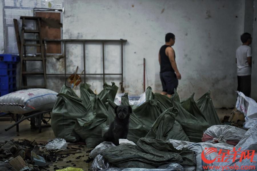 """受前两日台风山竹影响,广州市一德路附近的潮音横街(俗称""""冬菇街"""")水浸严重,街上商铺无一幸免,水浸最深达一米,摆放在低处的冬菇,木耳等干货均被泡湿。台风过境后,水开始慢慢退去,从昨日开始商家们已经在清理受灾货品,直到今日(18日)下午17时仍有大量货物没有清理完。因水浸时间较长,受潮货物堆积成山,本身就狭窄的""""冬菇街""""在废弃干货的挤压下更显逼仄。在冬菇街卖了20多年干货的黄先生表示,这次各家的经济损失估计有一百多万元,大家正忙着清理货物,现在就希望有关部门可以帮助清理一下街道里的废弃货物,""""只有条街通顺了,我们才能快点清理完,也方便开市迎客做生意啦!""""图为  """"冬菇街""""上的商家们正在热火朝天地清理受潮的干货,并把完好的货物挑选出来加以保存。 金羊网记者 周巍 摄"""
