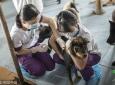 广州一动物医院免费给社区流浪狗打狂犬疫苗