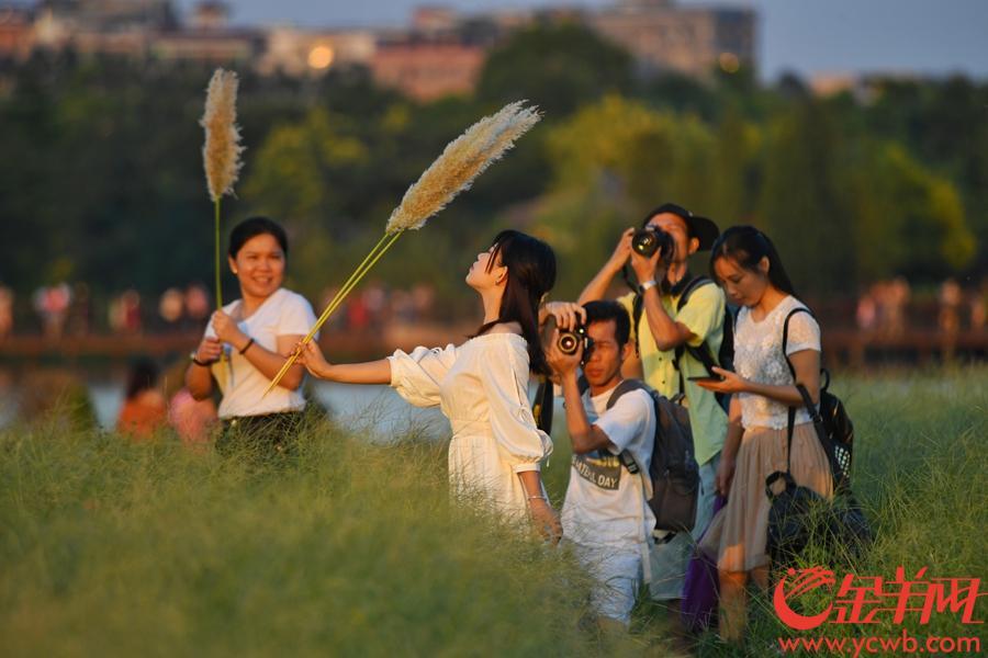 2018年10月3日,国庆长假第三天,海珠湿地公园游人如织,游人们徜徉在花海湖畔尽情享受假期的美好时光。  金羊网记者  汤铭明 摄影报道