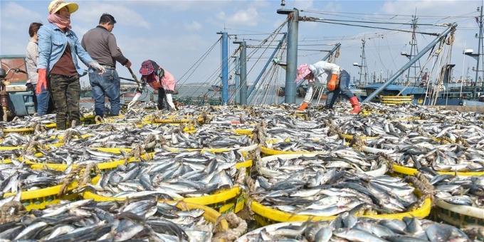 国庆渔港收获忙