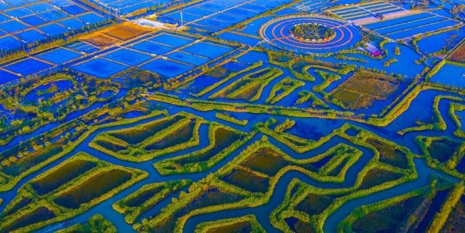 江苏泗洪:湿地迷宫秋景如画