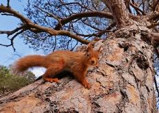 2018年英国野生动物摄影大赛获奖佳作