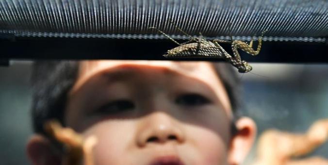 世界各地3.2万只活体昆虫亮相河北首届昆虫文化节