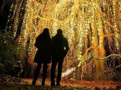 德国柏林植物园举行灯光秀 百万彩灯装点浪漫夜空