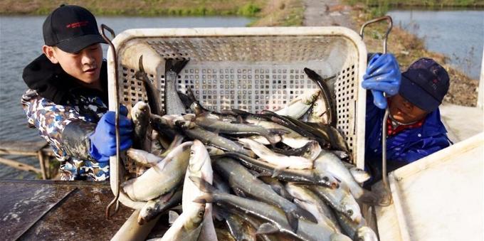 鱼跃人欢冬捕忙