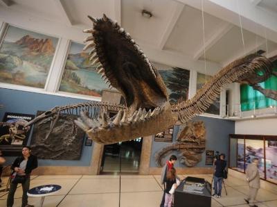阿根廷博物馆展出巨型蛇颈龙骨架