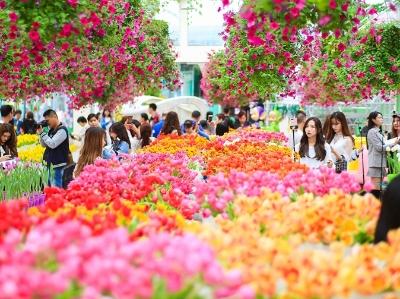 首届郁金香花博秀在百万葵园展出