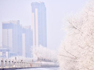 吉林松原松花江畔现雾凇景观