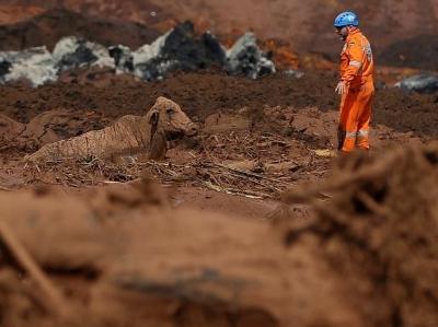 """巴西矿坝决堤 动物被泥石流裹成""""雕塑"""""""